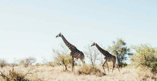 backpacken backpackkit zuid afrika
