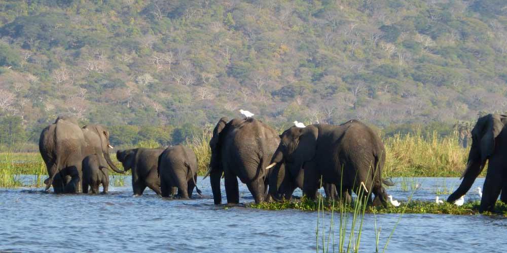 malawi olifanten backpacken backpackkit